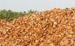 Coco peat wholesalers in pollachi